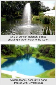 Fish Ponds vs Recreational Ponds