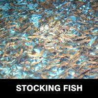 Stocking Fish