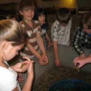 Students looking at toads