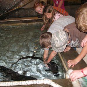 Sturgeon Petting Zoo