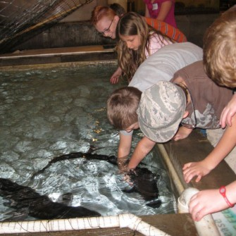 Sturgeon Petting Zoo