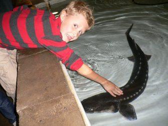 sturgeon-petting-zoo