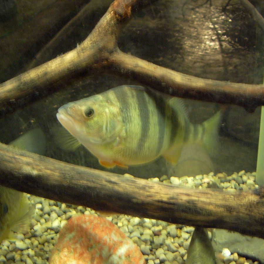 Fish Amp Critter Displays Freshwater Farms Of Ohio