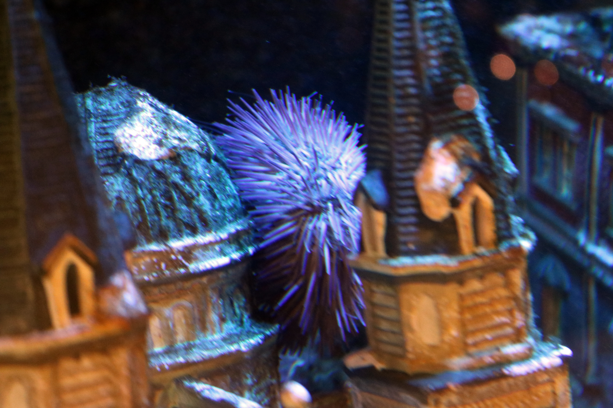 sea urchin making himself at home in our salt water tank
