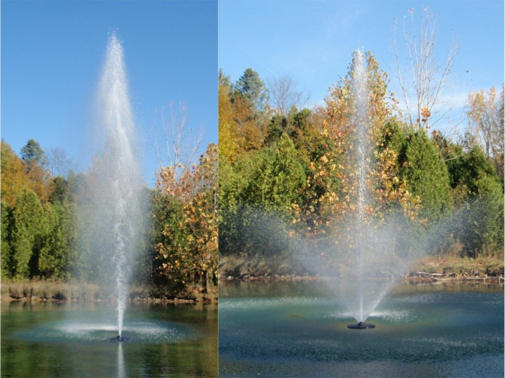 Fountain-Lily-Geyser