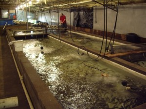 WaterSmith Aquaculture Systems