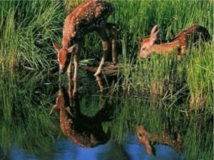 Wildlife Habitats
